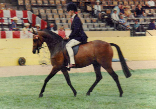 Caroline on Starlyte Royal Cabaret at the East of England Show