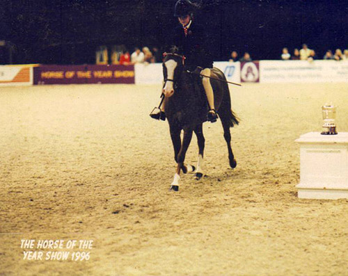 Douthwaite Knave of Hearts at HOYS again