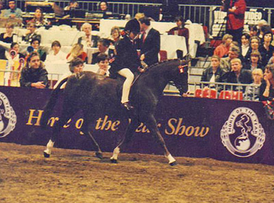 Douthwaite Knave of Hearts at HOYS